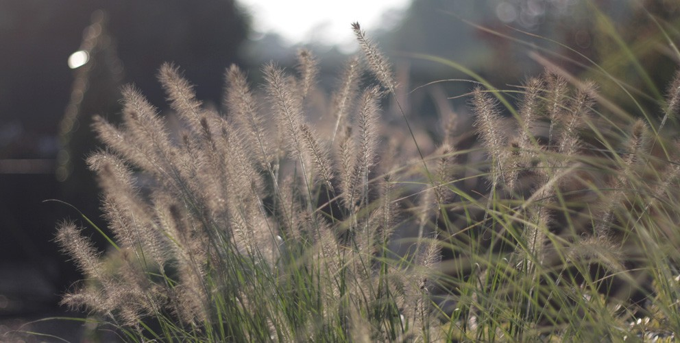 Hardy perennials alpines ferns grasses the secret for Hardy grasses for the garden